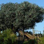 Ontdek Disneyland Park: Swiss Family Robinson Treehouse